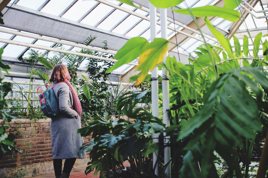 Botanische Tuin Leiden : Hortus botanicus leiden fernweh forevermore