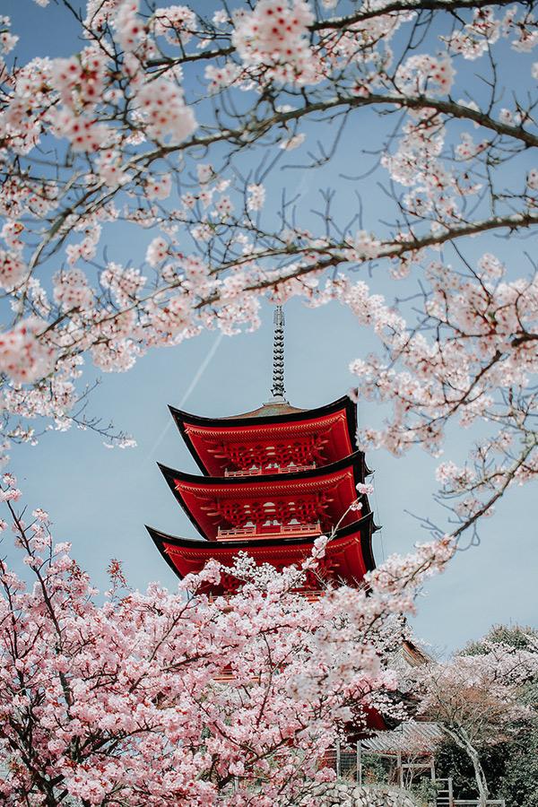 Pagoda in Japan met bloesem