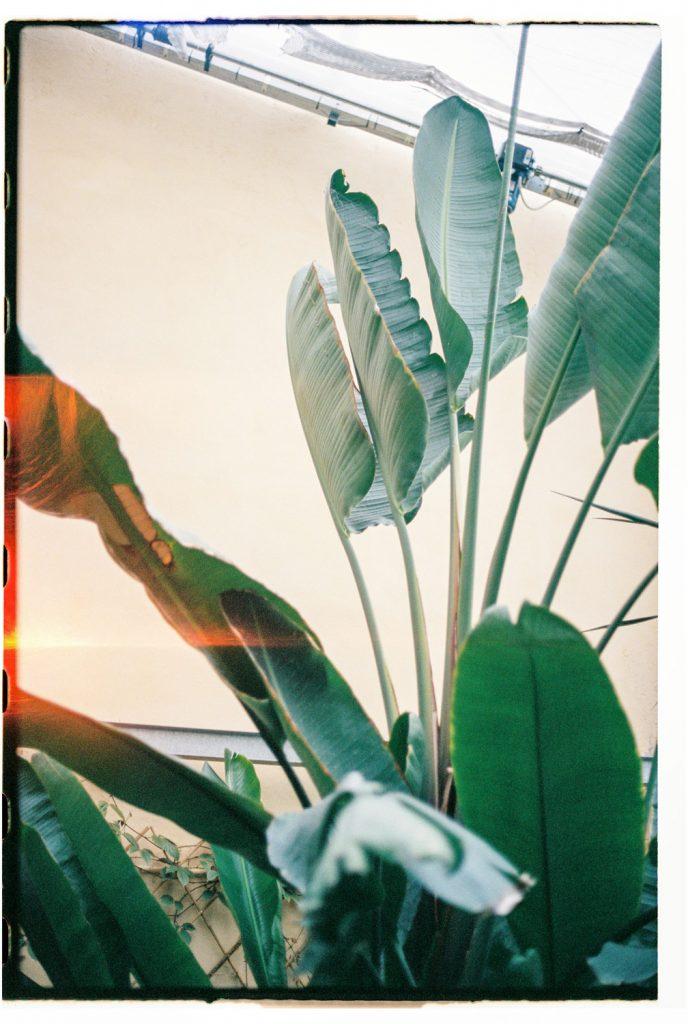 plant in botanische tuin