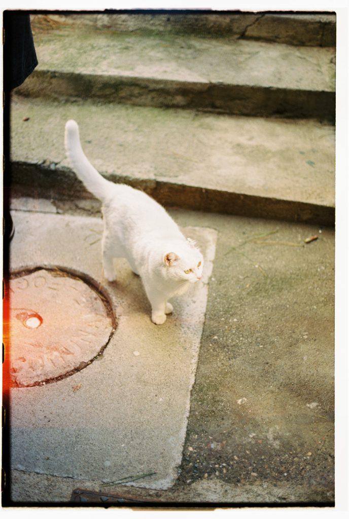 kat in cinque terre, Italië