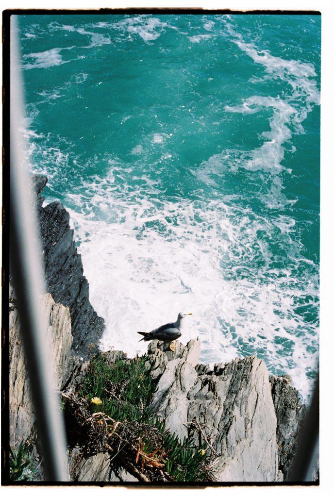 zeemeeuw in cinque terre, Italië