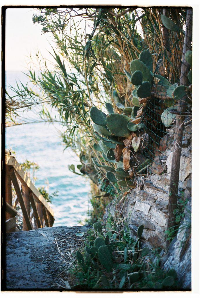 cactus in riomaggiore