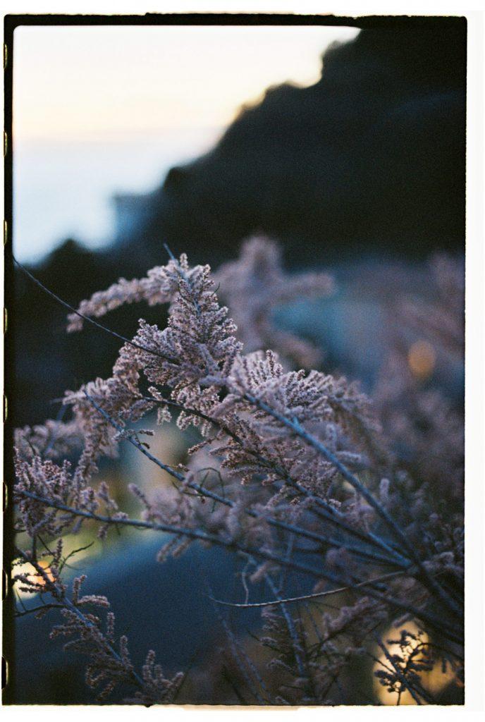 bloesemstruik bij zonsondergang in riomaggiore, cinque terre, Italië