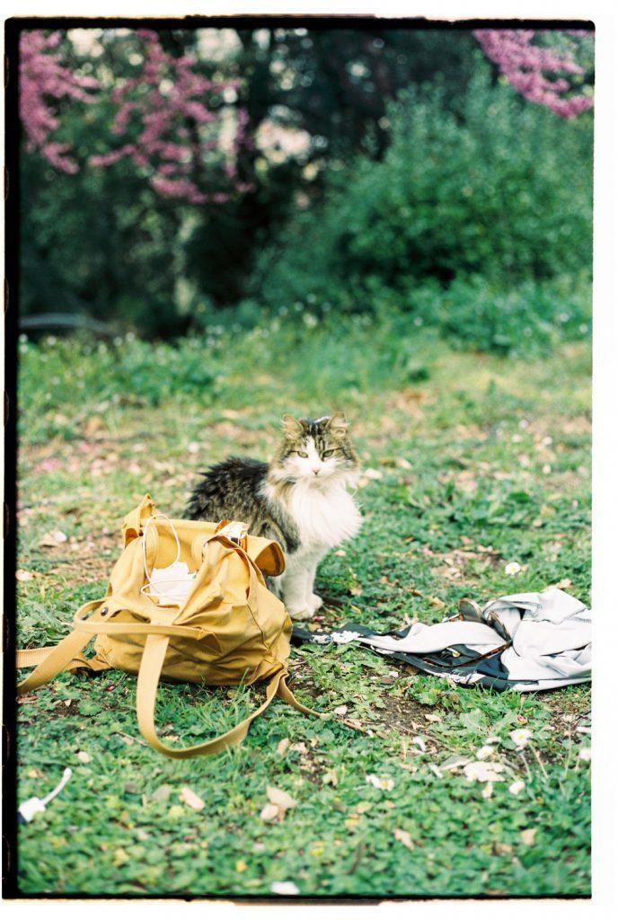 kat in een tuin in florence, italie