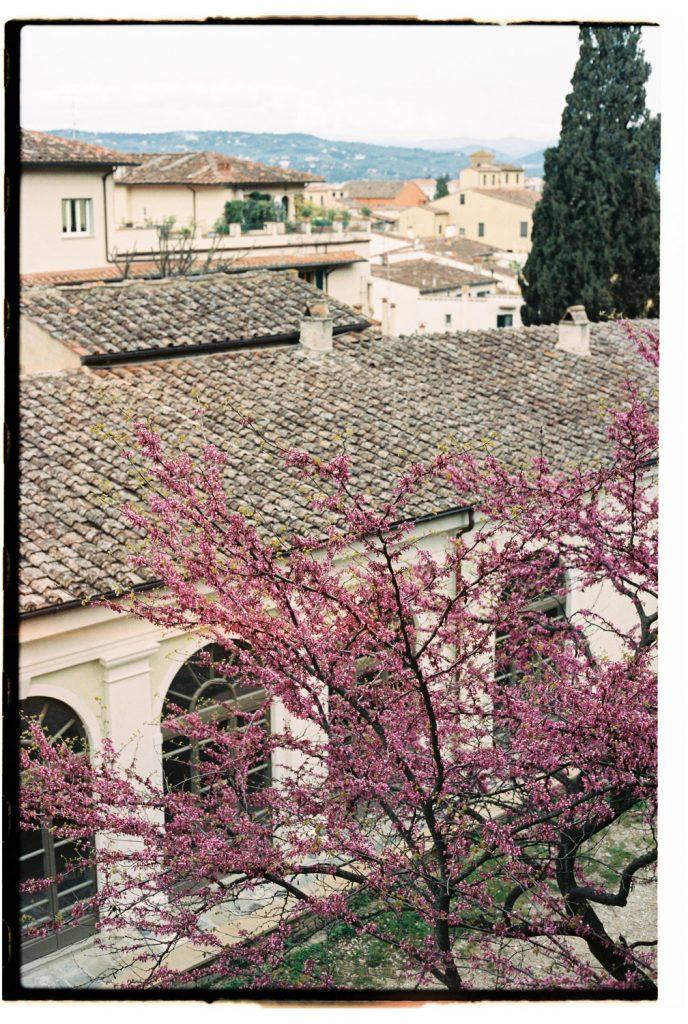 bloesemboom in botanische tuin in florence, italie