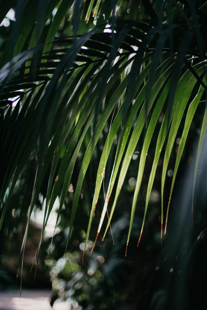plant in palmhuis poznan