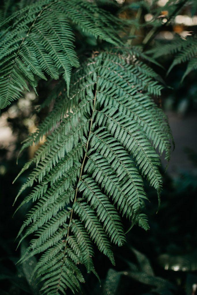 varen, plant in palmhuis poznan