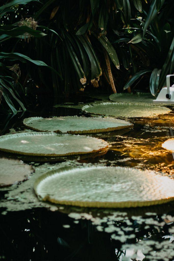 lelie plant in palmhuis poznan