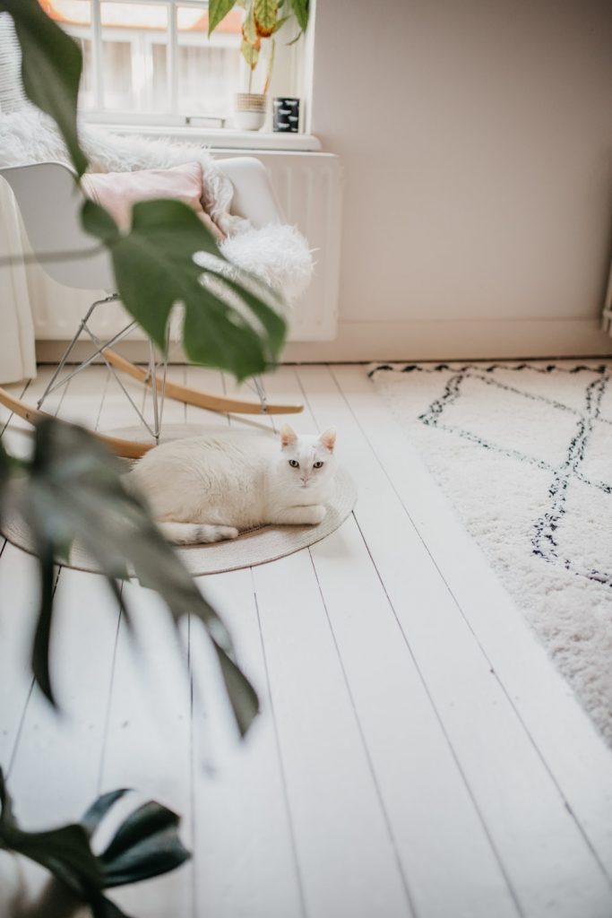 Witte poes ligt op de vloer en kijkt in de lens