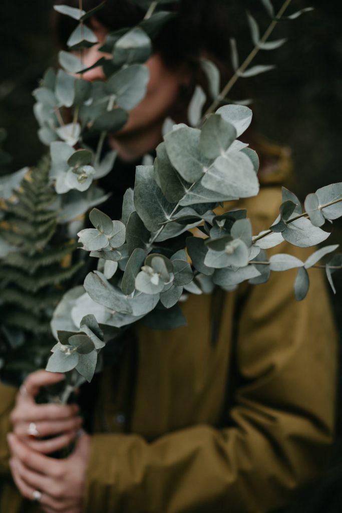 moody sfeerbeeld bos eucalyptus