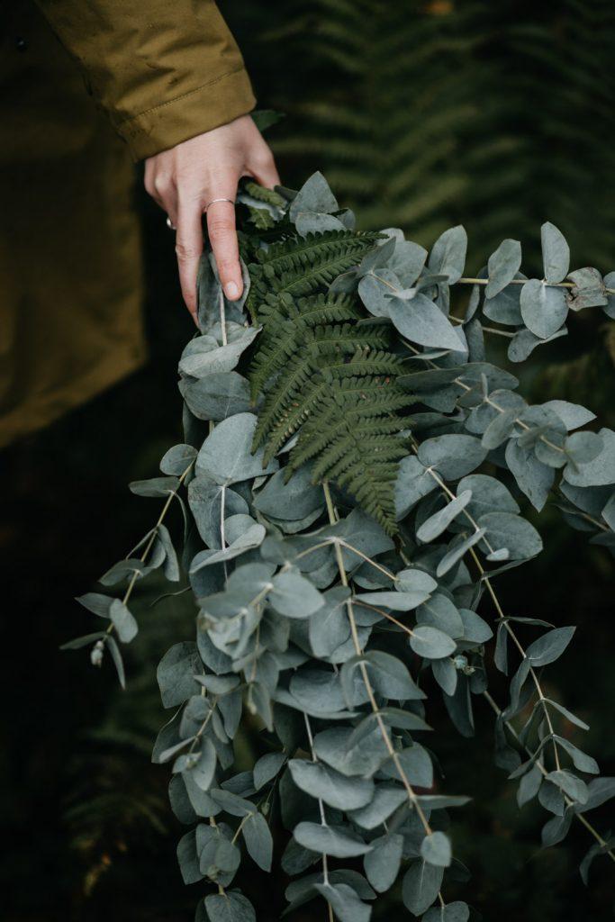 moody detail bos eucalyptus