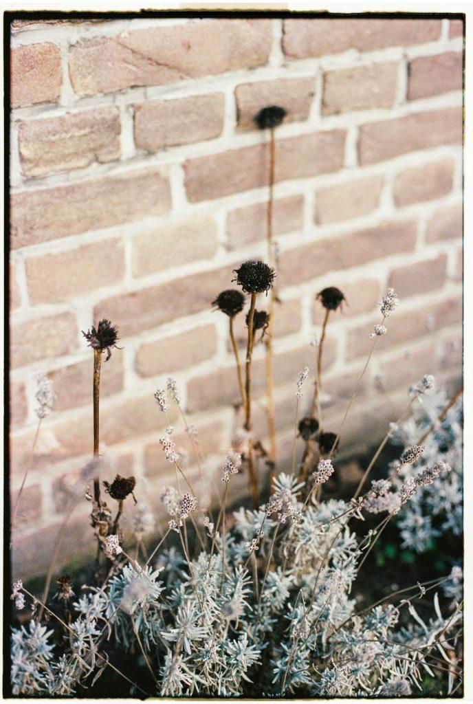 droogbloemen bij een muur