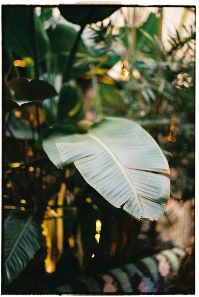 palmblad in een cafe