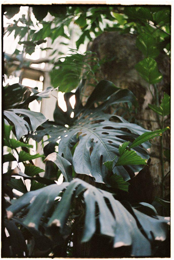 palarmia palmhouse in poznan, polen