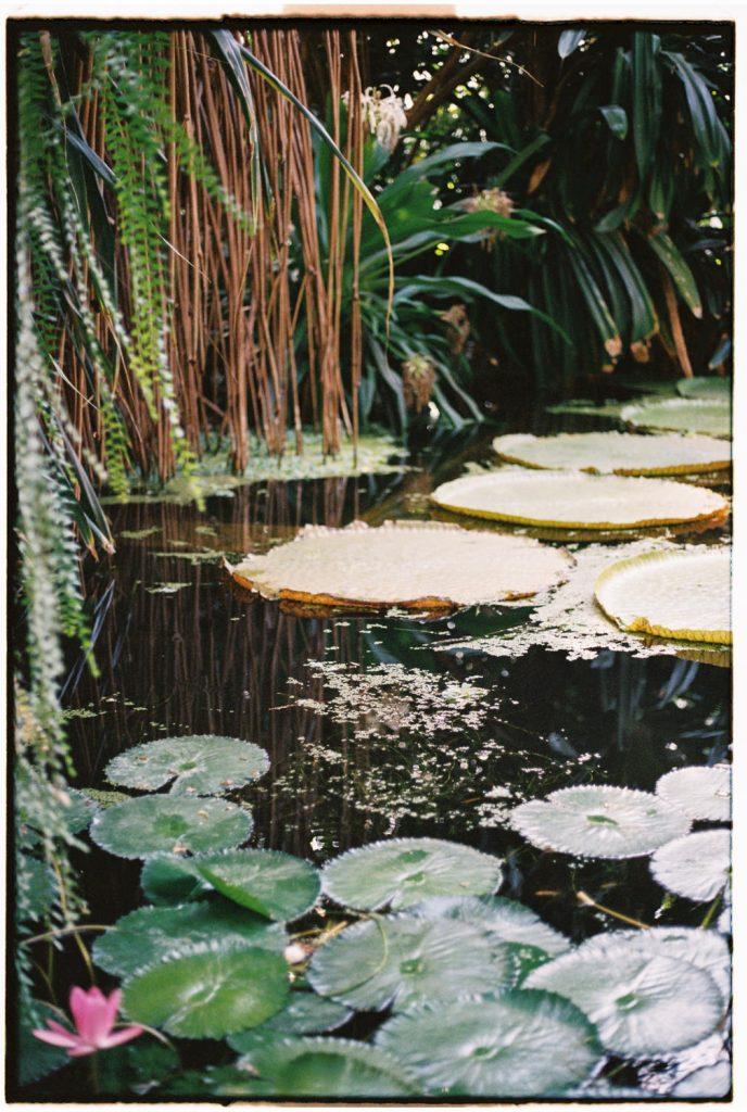 botanische tuin polen